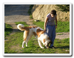residencia hotel mascotas animales compañía el rasón mieres asturias